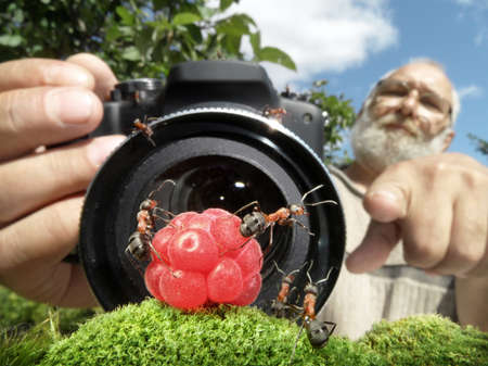 macro photographer managing ants, focused on ants photo