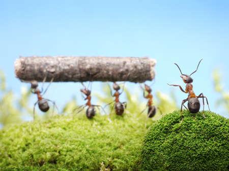 ameisenhaufen: Kopf Ameise Teamarbeit von Ameisen verwalten Lizenzfreie Bilder