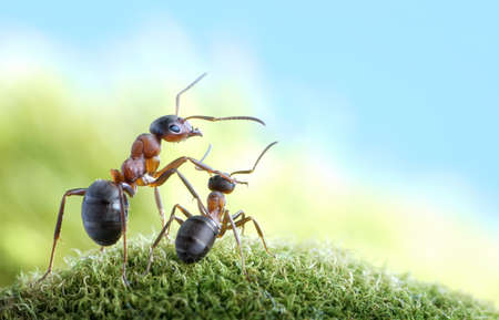 ants, on child care and protection, concept photo