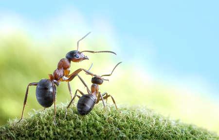 hormiga: hormigas, sobre el cuidado y protecci�n, el concepto Foto de archivo