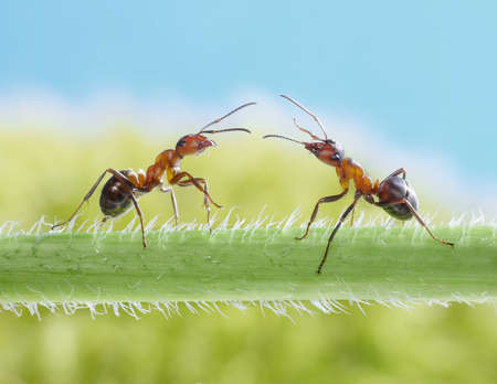 two ants meeting on grass photo