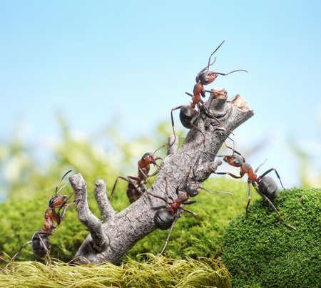 ant: equipo de hormigas derribar árbol degradado, el concepto de trabajo en equipo