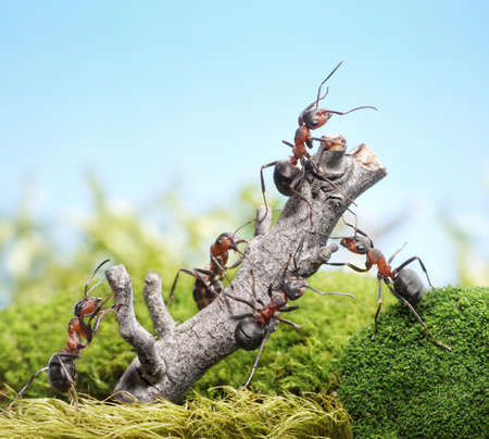 team of ants breaking down weathered tree, teamwork concept photo