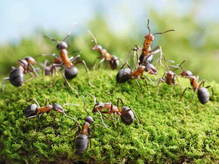 coordinacion: conferencia en el hormiguero, las hormigas de conexi�n con las antenas para crear redes Foto de archivo