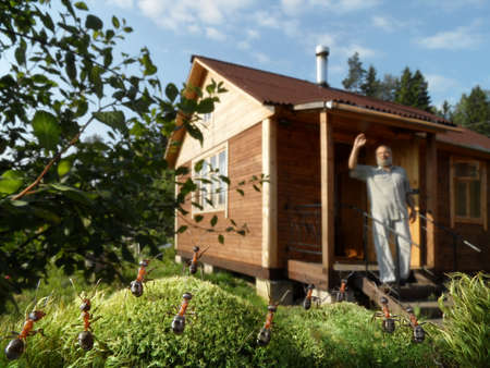 dacha: human and ants saluting to good morning