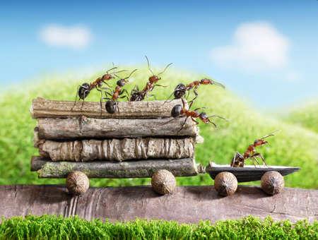 � teamwork: squadra di formiche trasporta tronchi con auto pista, lavoro di squadra, ecofriendly trasporto Archivio Fotografico