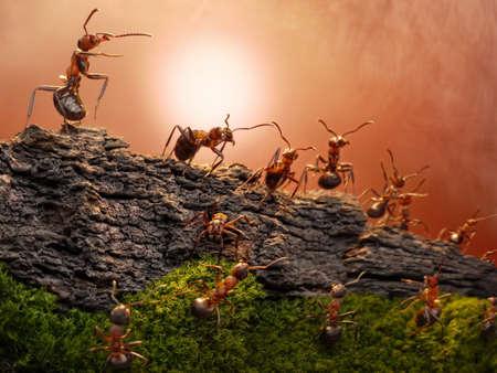 Fédérations de fourmilières de formica rufa créer des postes de gardes-frontière Banque d'images - 12035618