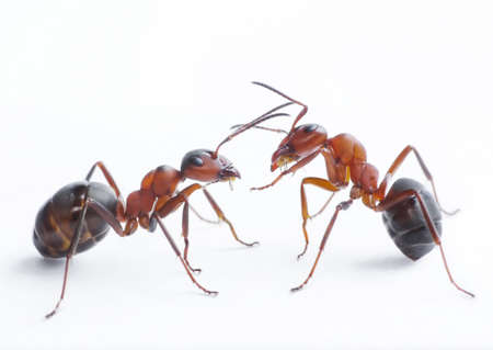 two ants playing