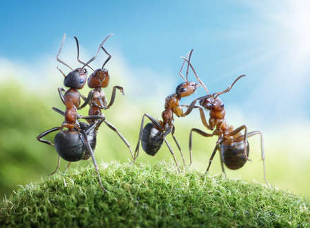 dancing under the sun (ants know to play games, scientific fact) Standard-Bild