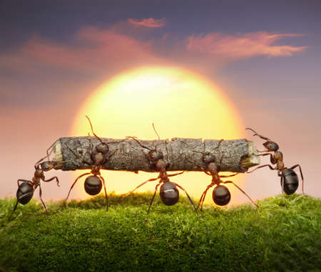 working animal: team of ants carry log on sunset or sunrise, teamwork concept Stock Photo