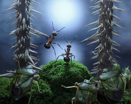 no monsters at Rotten Swamp!! ants stories, thriller.  focused on ants