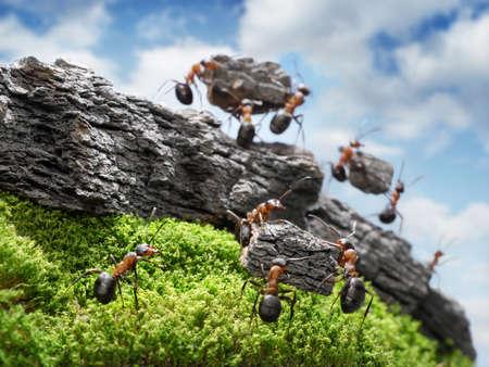 Team der Ameisen konstruieren Great Wall, Teamwork-Konzept, auf nächsten Block konzentriert