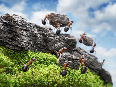team of ants constructing Great Wall, teamwork concept, focused on nearest block Stock Photo - 12466893