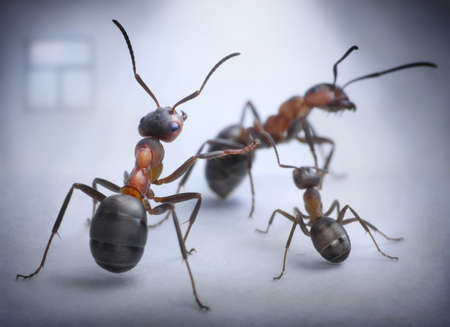 ants play human situation of family scandal, focused on mother