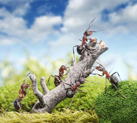 working animal: team of ants breaking down tree, teamwork concept Stock Photo