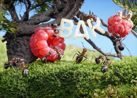 ants enjoy juicy fruits, fresh juice bar in anthill