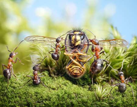Bee talking to ants Standard-Bild