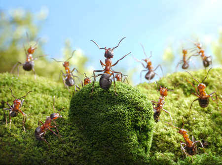 ant tales photo