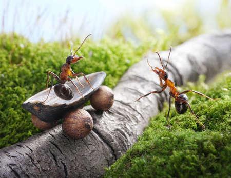 Lever, beau! en auto-stop, des fourmis contes Banque d'images - 12905661
