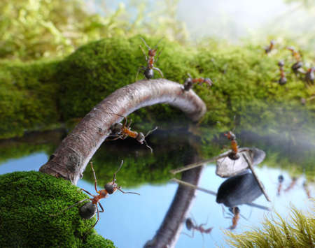 hormiga: nuevo puente y el barquero gorr�n, los cuentos de hormigas Foto de archivo