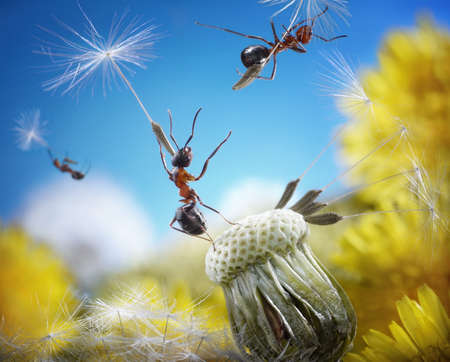 ants flying away with crafty umbrellas - seeds of dandelion, ant tales