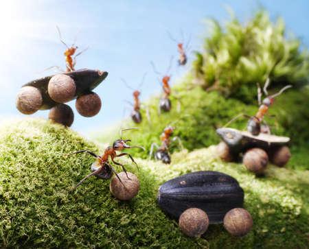 hormiga: accidente de coche en las carreras de las hormigas, las hormigas de cuentos