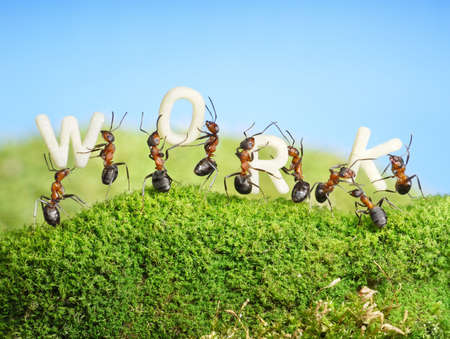 team of ants constructing word WORK, teamwork Stock Photo