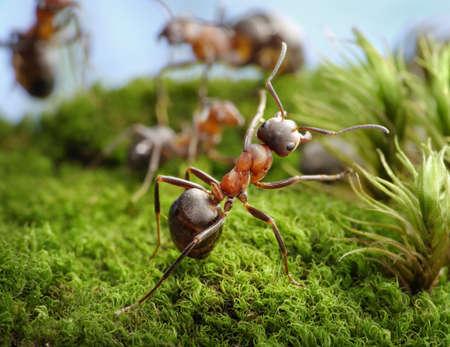 feat: �Detente! Escritura de h�roe, los cuentos de hormigas