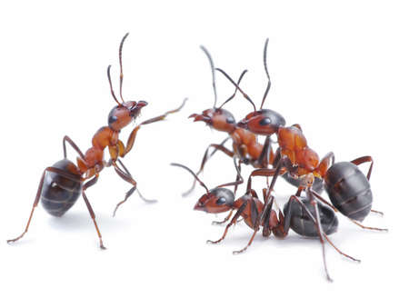 team of ants, conference Stock Photo