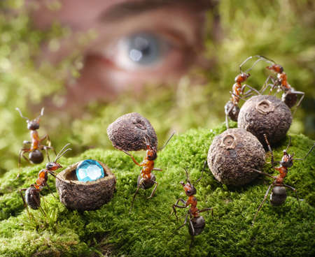 human spying after ants hide treasure, ant tales