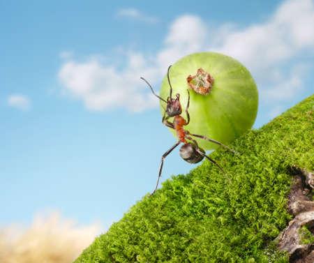 upgrade: ant rolls berry upgrade Stock Photo