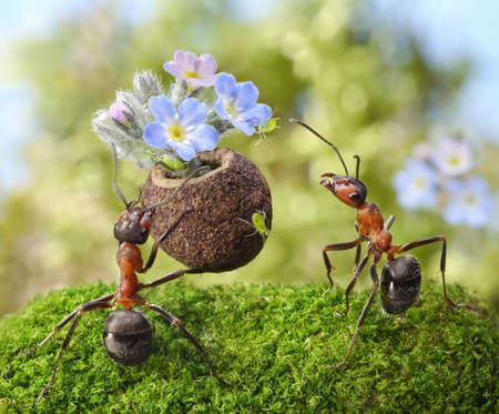 gives: ant gives flowers with sweets, juicy greenflies, ants tales