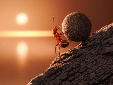 red ant: ant Sisyphus rolls stone uphill on mountain, concept