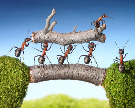 working animal: team of ants carry log on bridge, teamwork concept