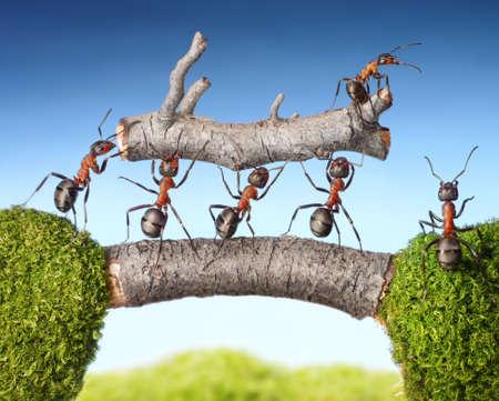 Team von Ameisen tragen Protokoll auf der Brücke, Teamwork-Konzept