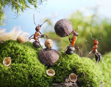 Ameisen knacken Nüsse mit Steinwerkzeugen, Hände weg ant Märchen Lizenzfreie Bilder