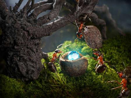 hormiga: Ocultar las hormigas tesoro de diamantes en la noche, los cuentos de hormigas