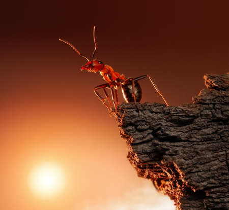 ant on top of rock, mountain peak, concept Stock Photo