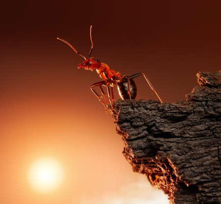 antrey: ant on top of rock, mountain peak, concept Stock Photo