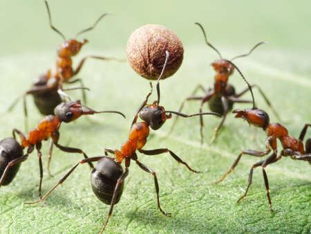team of ants play volleyball with pepper seed photo