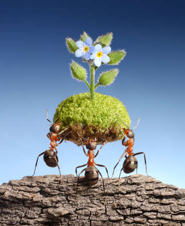 ants bring piece of living nature at empty rock. Federal ant programs in some countries help forests to survive Stock Photo