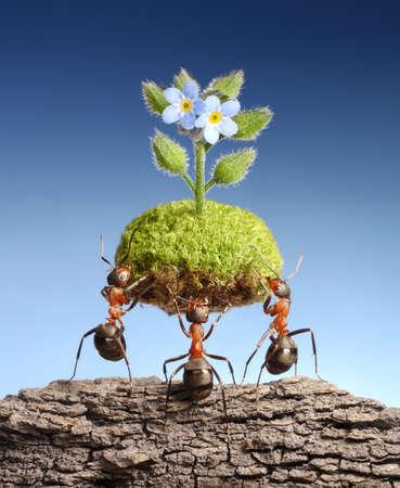 apporter: les fourmis apportent morceau de nature vivante au rocher vide. Programmes f�d�raux de fourmis dans certains pays � aider les for�ts pour survivre Banque d'images