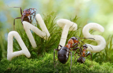 not worm but letter S !  ant tales Stok Fotoğraf - 16673053
