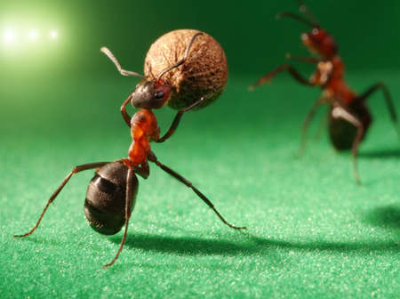ants play soccer at night stadium with lamps, fantasy Standard-Bild