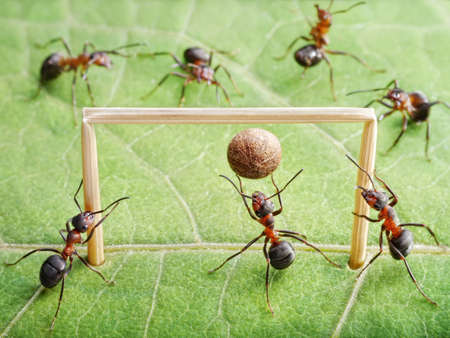 red ant: goal keeper in gate, team of ants play soccer