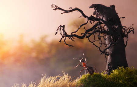 meeting new day with old tree, ant tales Standard-Bild