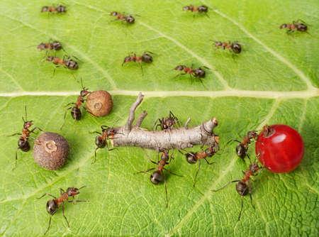 ant leaf: línea divisoria y el tráfico de carga en el camino del trabajo hormigas en hormiguero, trabajo en equipo Foto de archivo