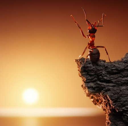 thanksgiving, ant tales Standard-Bild