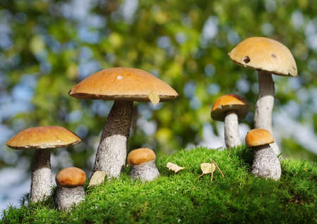 two families of mushrooms meeting in the forest, fantasy photo