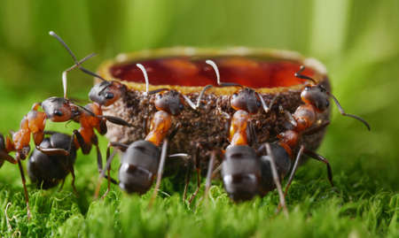 comon, guys   feeding ants with sweet syrup Stok Fotoğraf - 18379977